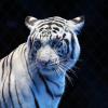 Что объединяет носорога, белых тигров и пса?