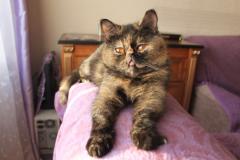 Кошка-привереда, коттедж котэ и гавкающий папа