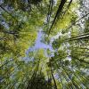 Восстановим леса Беларуси