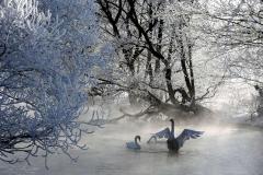 Как помочь птицам зимой, чтобы не причинить вреда?