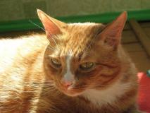 Как отучить кошку от вредных привычек?