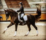 Как научить лошадку танцевать?