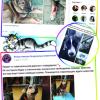 Подростки создали фонд помощи животным