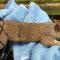 Белка-обжора застряла в кормушке для птиц
