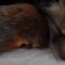 Лисёнок и бельчонок подружились в Гродненском зоопарке