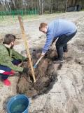 Высадили фруктовые саженцы ученики Красноборского детского сада–средней школы