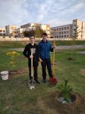 Время для посадки деревьев!