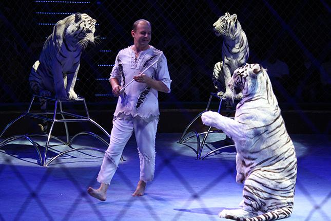 Сергей Нестеров и белые тигры
