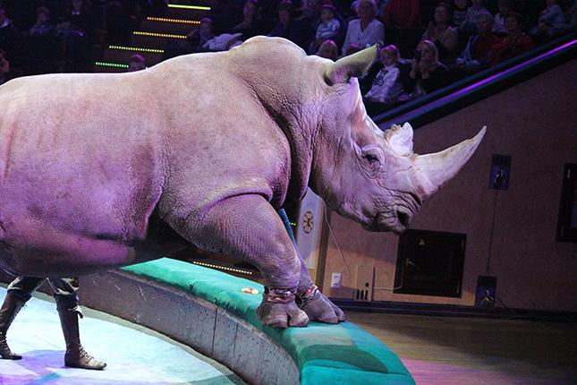 мафа носорог