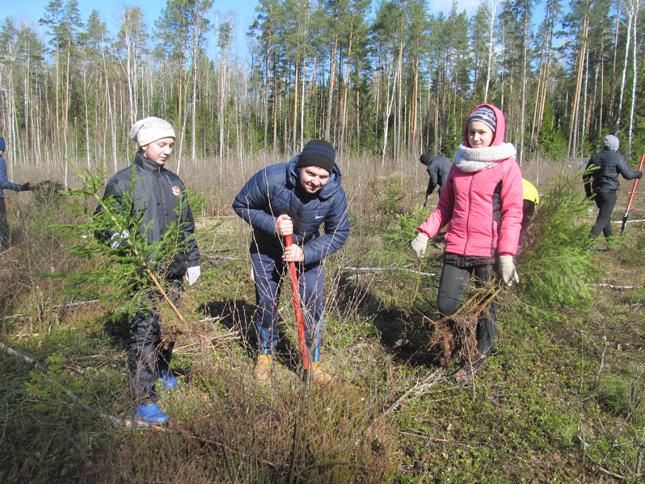 посадили лес
