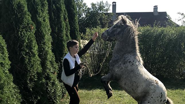 Дрессура пони