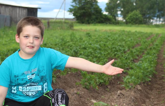 Картофельное поле (3)